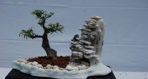 Bonsai article1