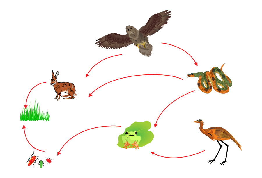 food-chain-biological-circle-of-nature