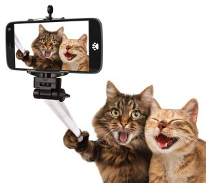 funny-cats-self-picture