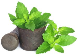 holy-basil-or-tulsi-leaves-in-a-vintage-mortar
