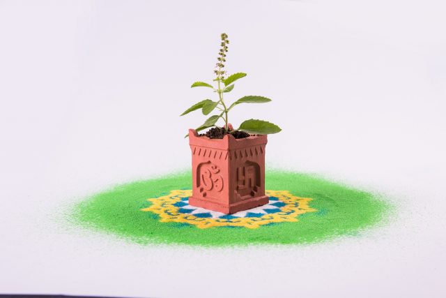 tulsi leaves indian-traditional-tulsi-pot
