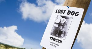 lost dog poster on a light post