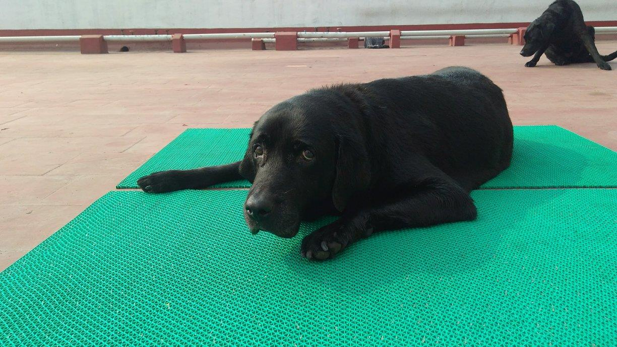 dog with Arthritis on Rubber anti-skid mats