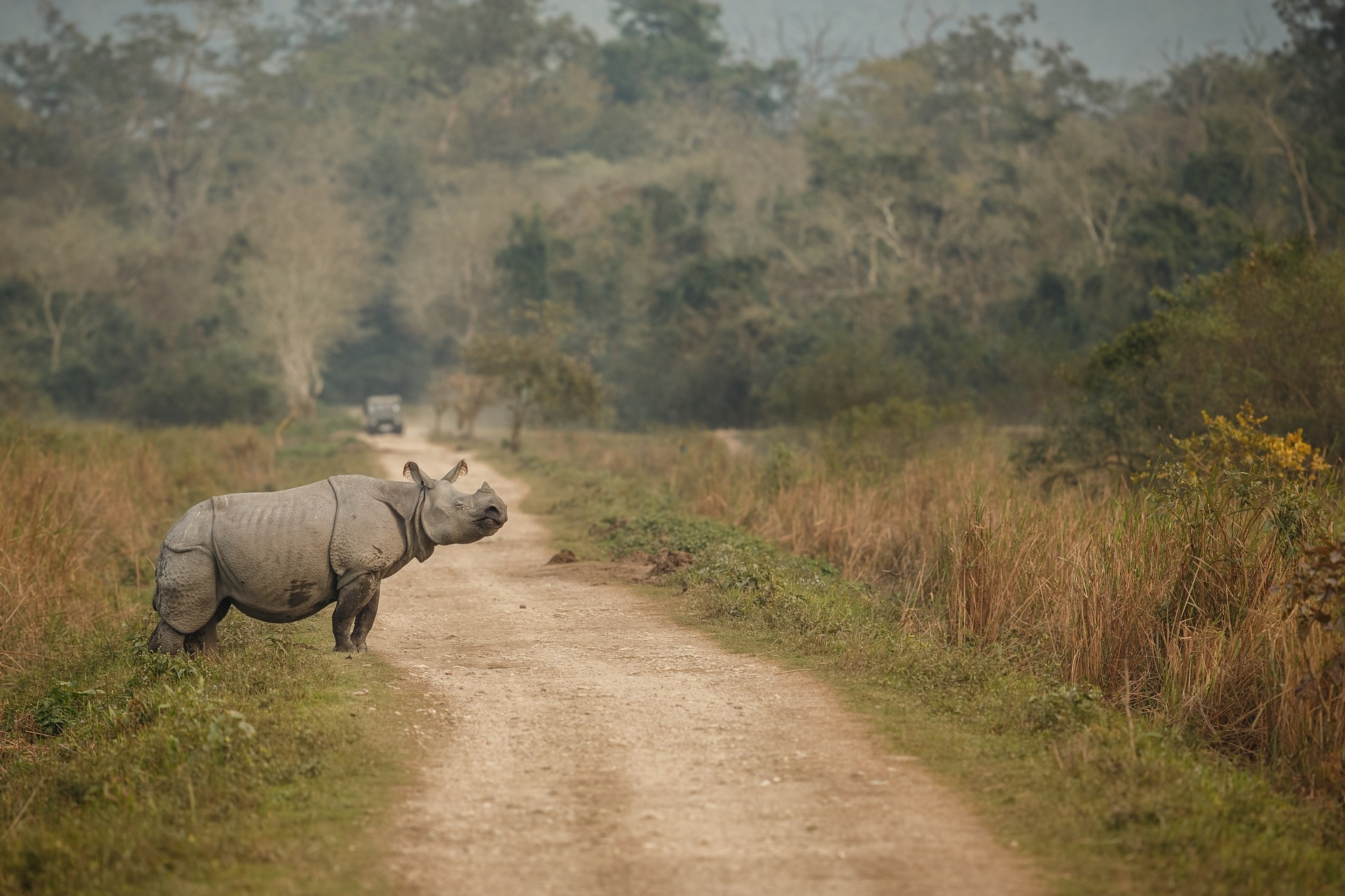 A Rhino in Kaziranga National Park, Assam