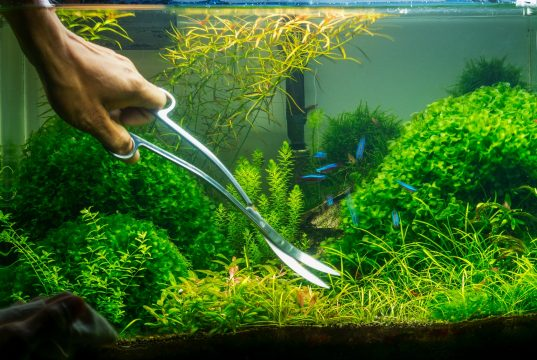 How to create an aquascape